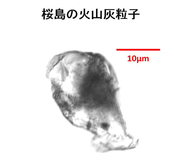 井上先生コラム4-桜島