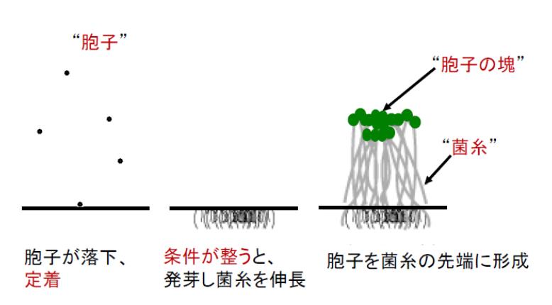 yaguchi_1-1