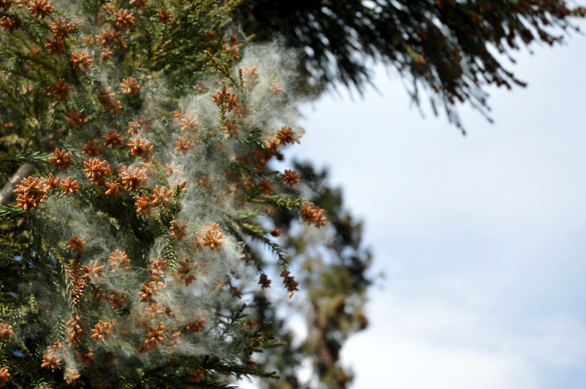 花粉イメージ写真